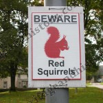 Red squirrels live here